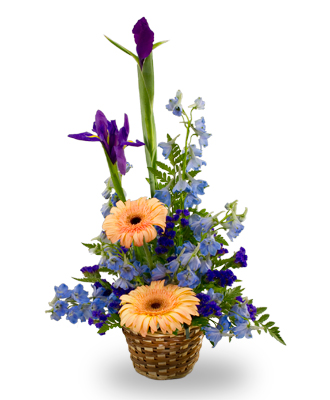A basket arrangement for a baby boy